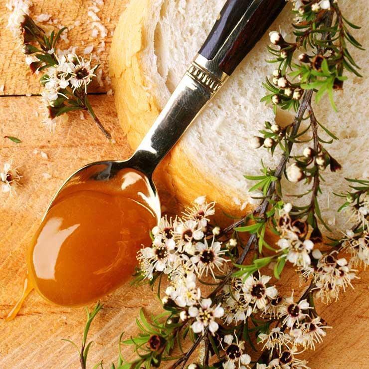 Mật ong Manuka: Nguồn dinh dưỡng quý giá không thể bỏ qua