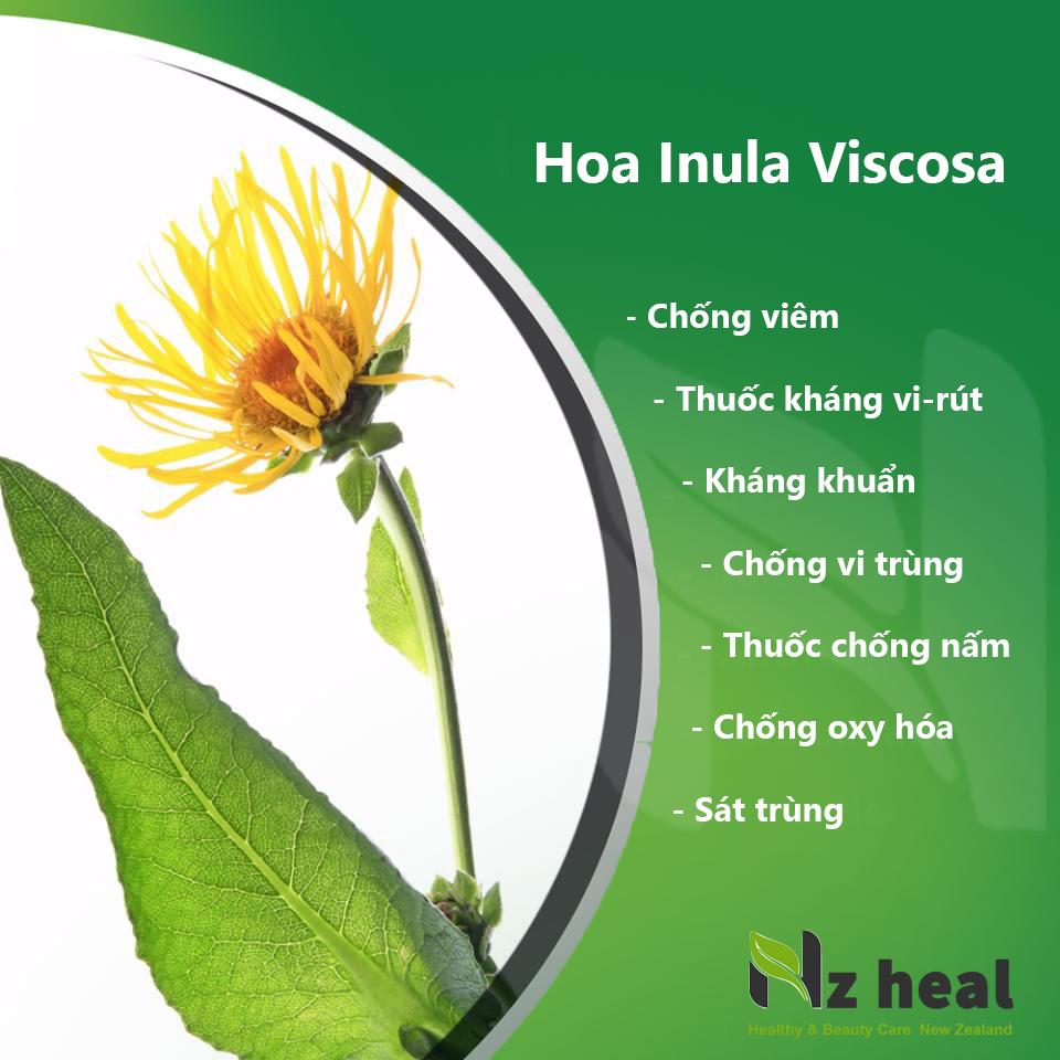 Lavior gòm thành phần hoa Inula Viscosa
