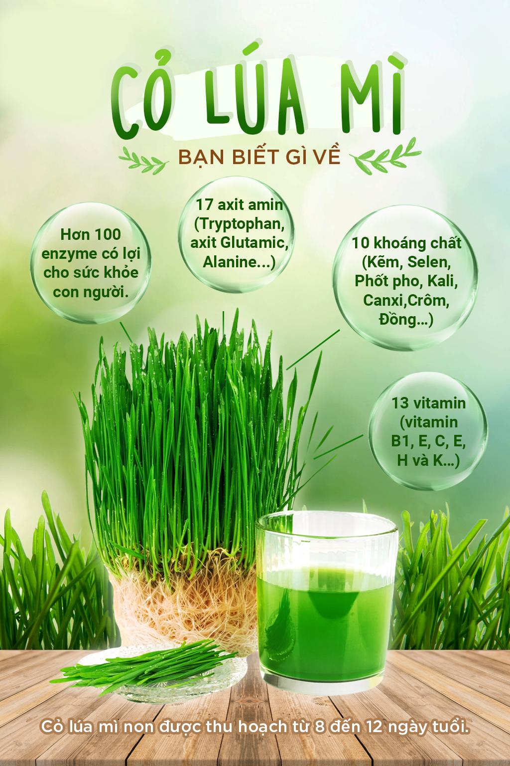 Viên uống Deep Blue Health Wheat Grass từ cỏ lúa mì - Bổ sung khoáng chất & Vitamin