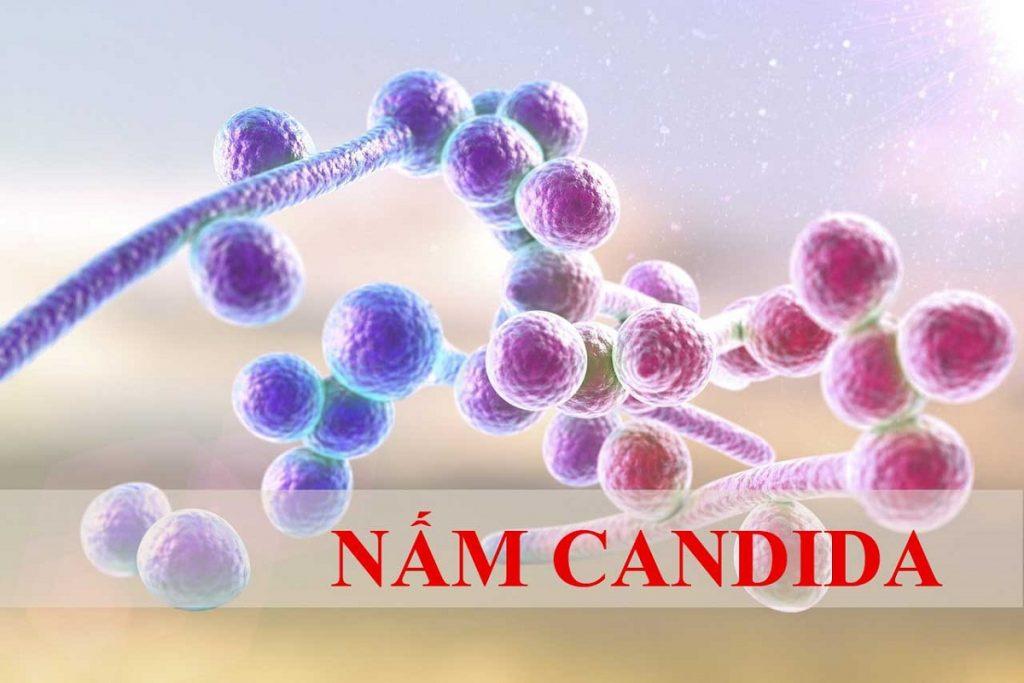 Hiện tượng nấm chết 'Candida Die-Off' có thật không và cách đối phó
